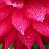 Soft Rain