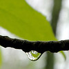 The Droplet