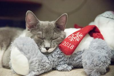 kittenwithbear3
