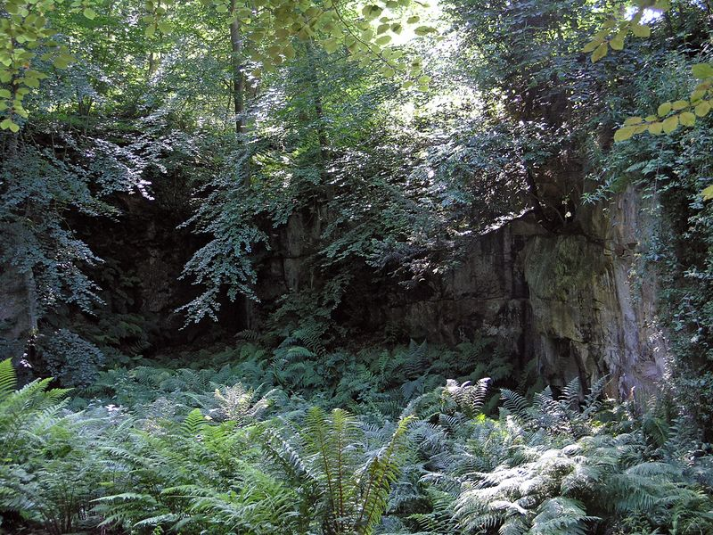 A small fernery in Belsay quarry.