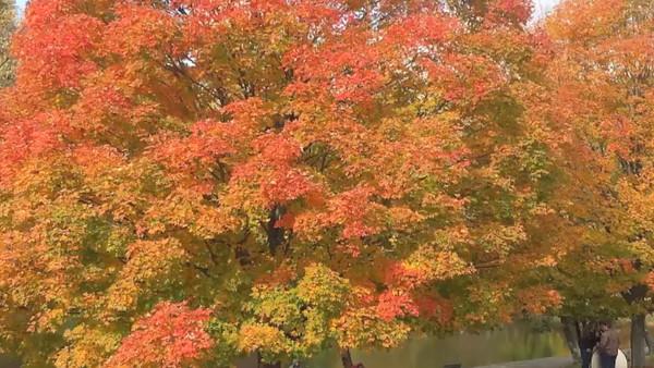 Oglebay:  Fall 2015