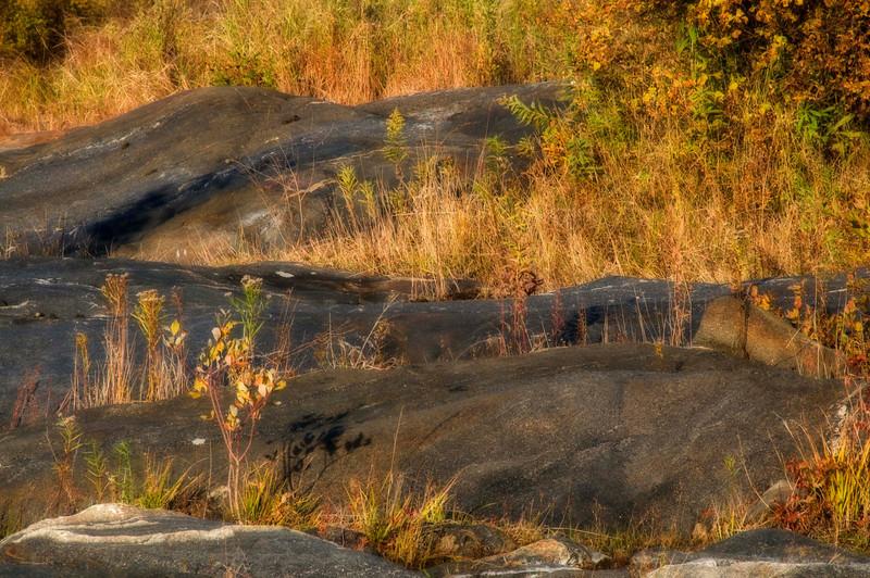 Rocks & Grasses
