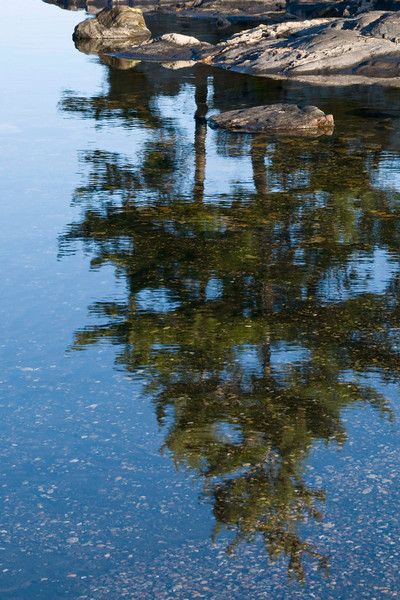 White Pine Reflection