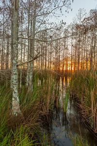 The Everglades National Park