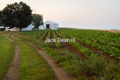Tobacco Field (Cambell County)