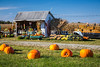 Pumpkins for sale near Apple Creek, Ohio, USA.