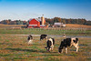 An Amish dairy farm near Apple Creek, Ohio, USA.