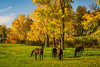 Fall foliage color in the trees near Mt. Hope, Ohio, USA.