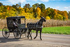Amish horse and buggy with fall foliage color near Mt. Hope, Ohio, USA.