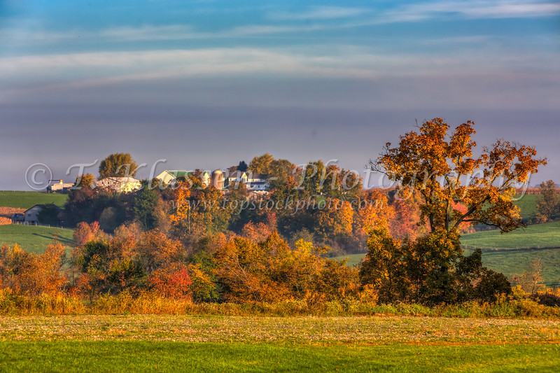 An Amish farm with fall foliage color near Berlin, Ohio, USA.