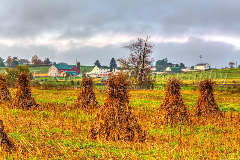 Amish farms with corn shocks near Berlin, Ohio, USA.