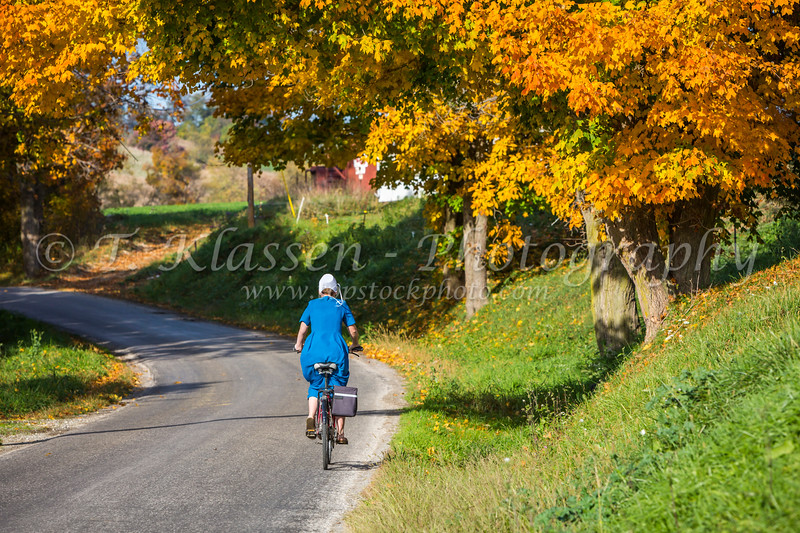 An Amish lady riding a bicycle with fall foliage color in the trees near Charm, Ohio, USA.