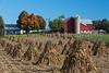 An Amish farm with corn shocks in the field near Kidron, Ohio, USA.