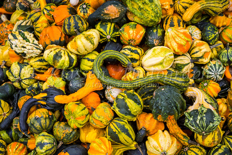 A closeup of gourds at a farm produce market near Walnut Creek, Ohio, USA.