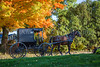 A horse and buggy on a rural road in Amish country with fall foliage color  near Walnut Creek, Ohio, USA.