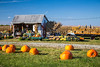 Pumpkins for sale near Apple Creek, Ohio, USA.