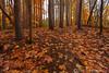 Beaver Creek Reservation - Oct192012_4619 - Amherst, Ohio