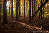Beaver Creek Fall 2011 Trees (1) - Amherst, Ohio