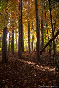 Beaver Creek Fall 2011 Trees (2)