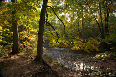 Beaver Creek Fall 2011 Trees (4)