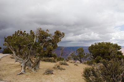 Grand Canyon-2609