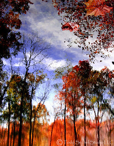 Fall Reflections 4- Birmingham, Ohio