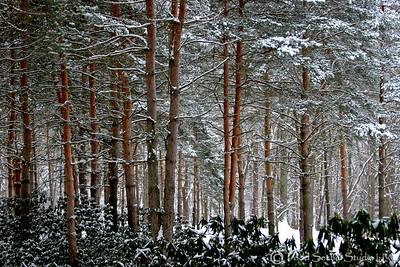 Schoepfle Garden Winter (3) - Birmingham, Ohio