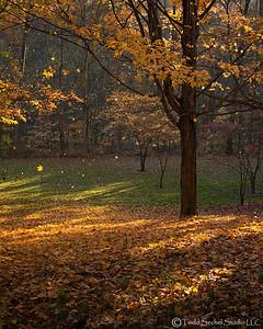 Schoepfle Garden - Oct222012_4764 - Birmingham, Ohio