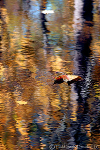 Fall Reflections 10- Birmingham, Ohio