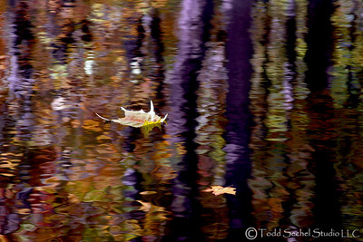 Fall Reflections 2- Birmingham, Ohio