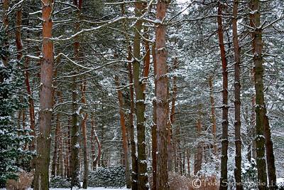 Schoepfle Garden Winter (4) - Birmingham, Ohio