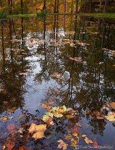 Schoepfle Garden Fall (3504) - Birmingham, Ohio