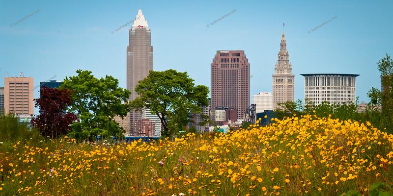 Wildflower Skyline