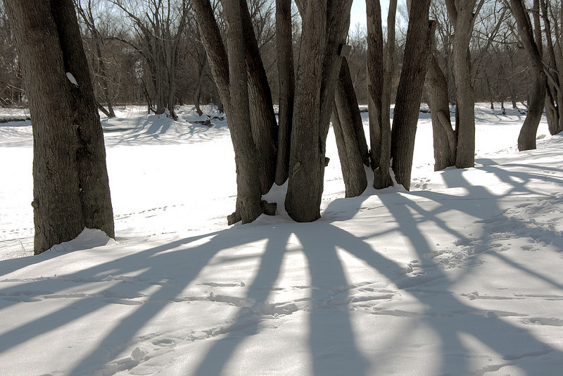 Trees in winter - shadows on snow