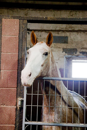 stables-0057