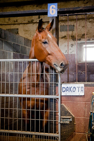 stables-0051