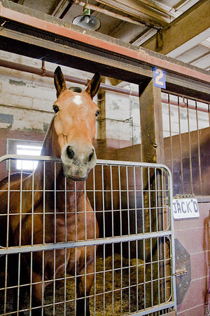 stables-0041