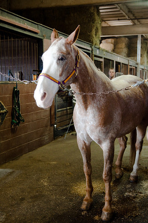 stables-0156