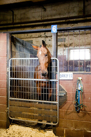 stables-0052
