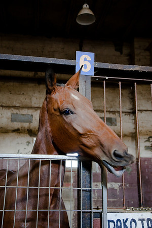 stables-0122