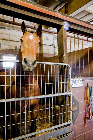 stables-0042