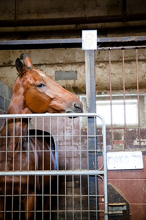 stables-0116