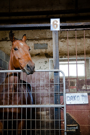 stables-0115