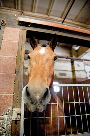 stables-0045