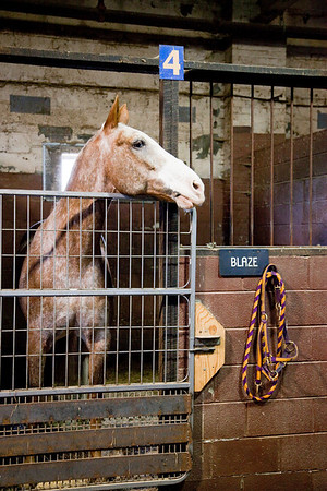stables-0058