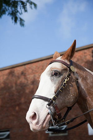 stables-0259