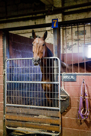 stables-0053