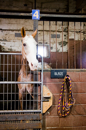 stables-0014