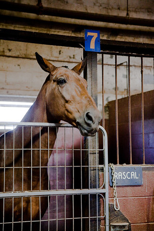 stables-0127
