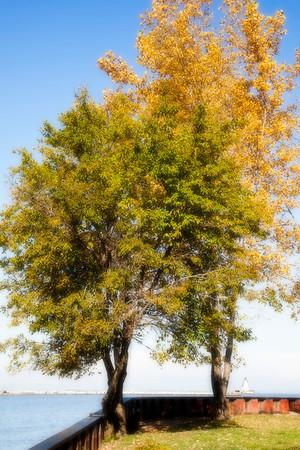 Lake Erie Trees in Autumn